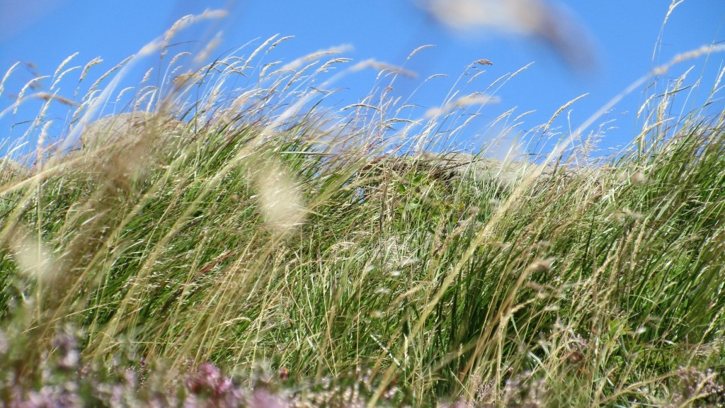 Well if that doesn't look like flowering grass, blue sky and a touch of heath!